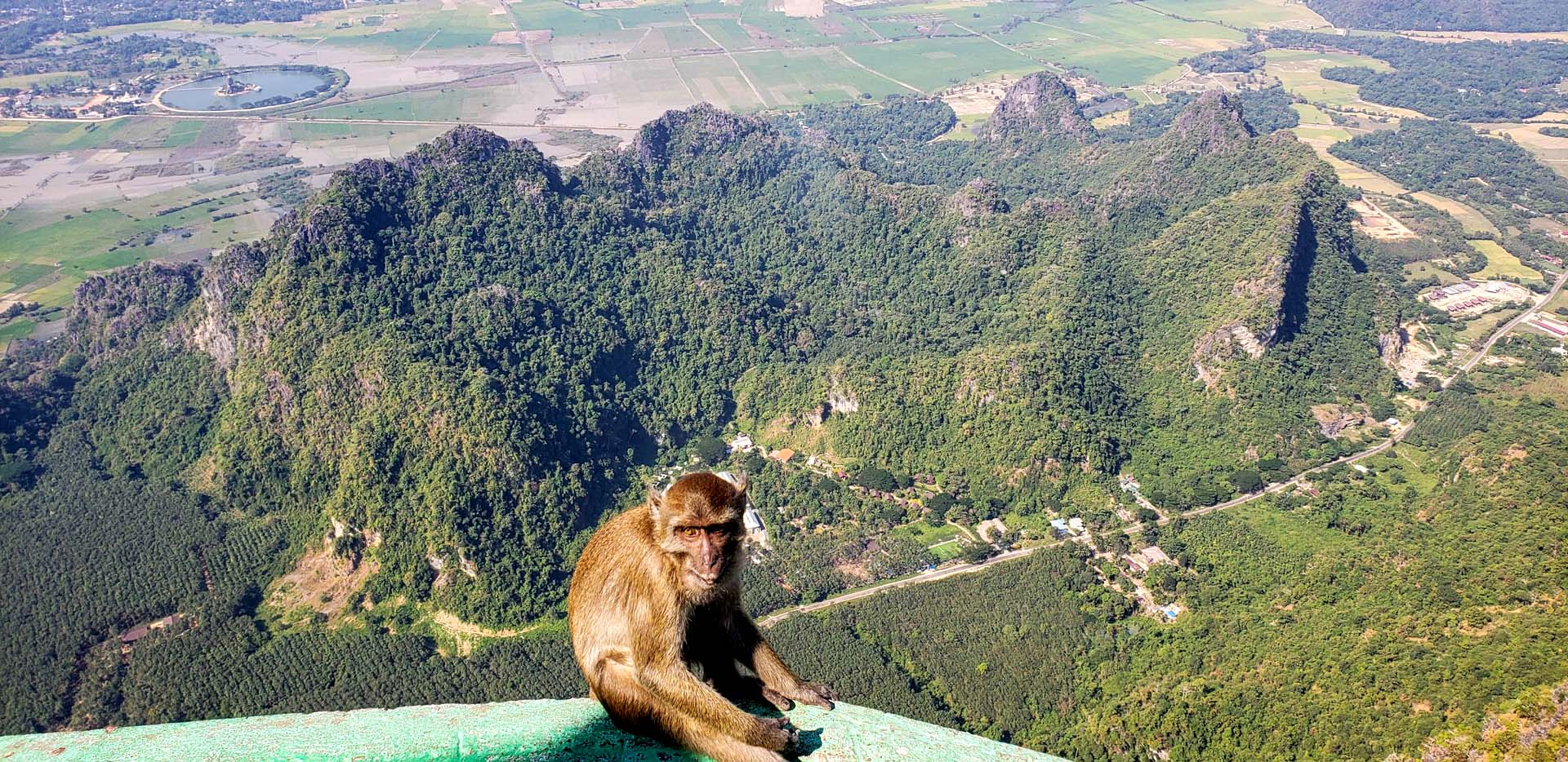 Macaque Monkey on top of Mount Zwegabin