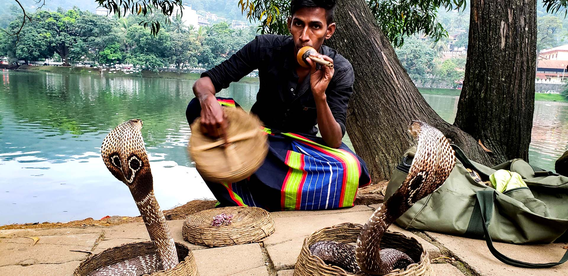 Snake Charmer with Cobras