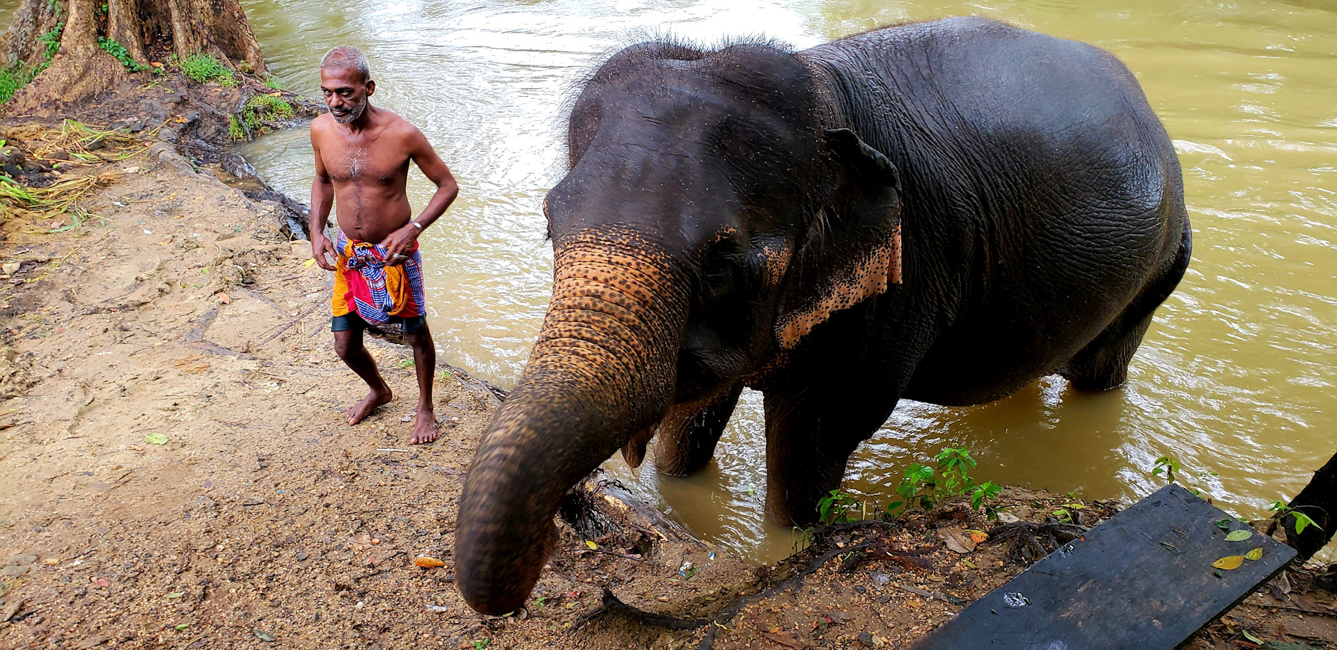 Elephant and Mahout in River