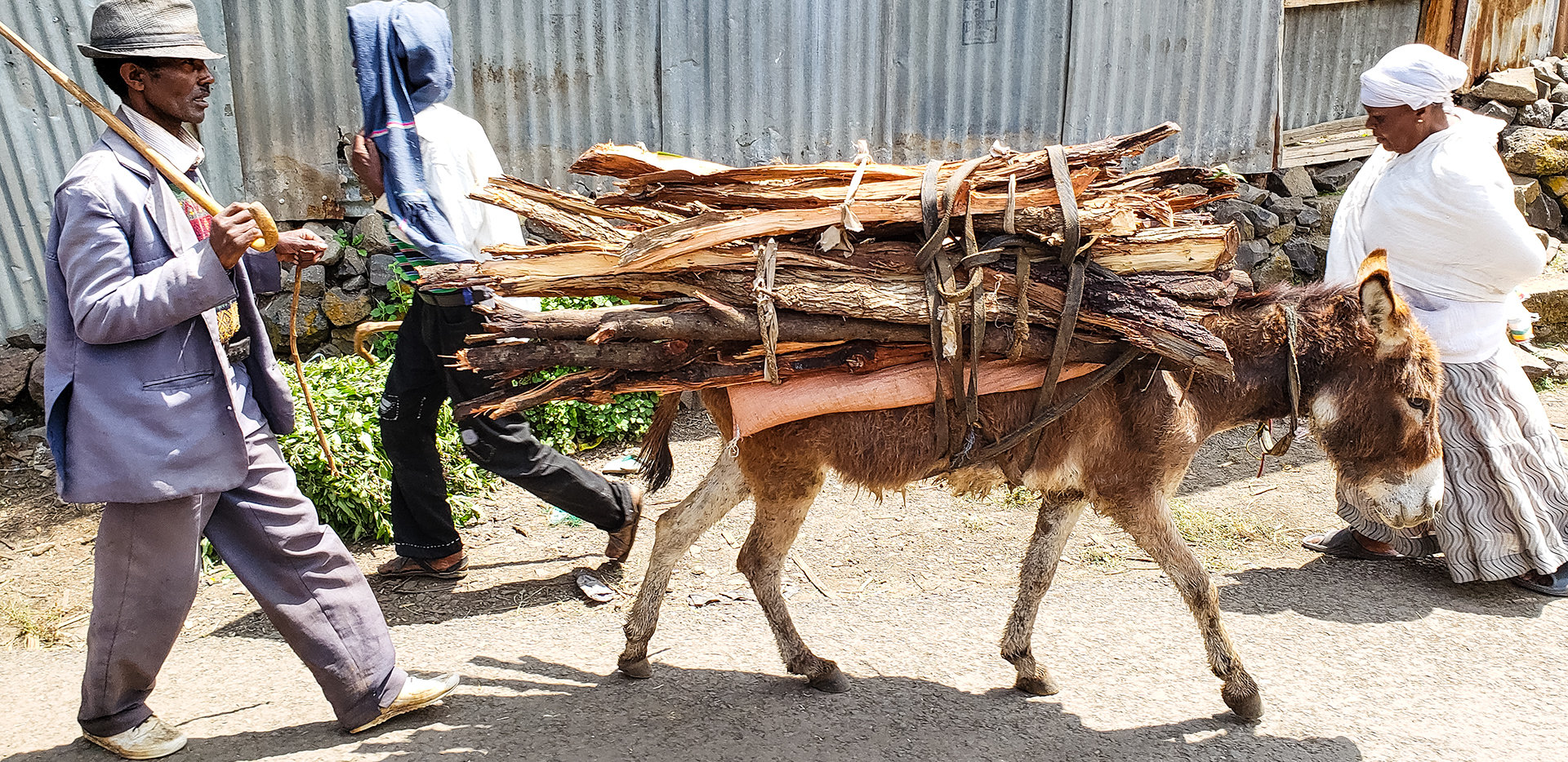Donkey Heading to Market